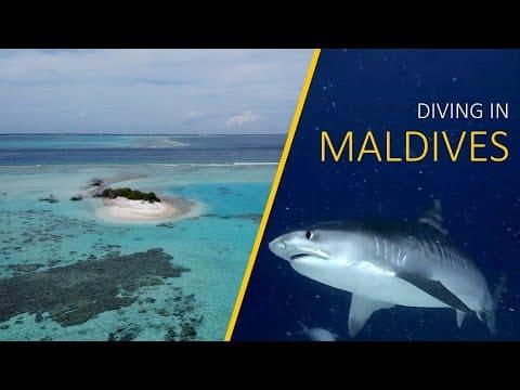 Videos Tauchen Malediven