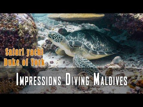 Malediven Videos Tauchen